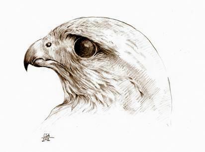 """1d785a809c Hogy milyen madár lehetett a magyarok ősi turulja, azt mind a mai napig nem  sikerült egyértelműen megállapítani. Természetesen a madár """"szent"""" volta  nem ..."""